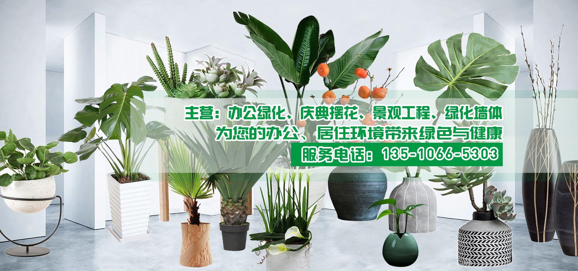 办公绿化、庆典摆花、景观工程、绿化墙体