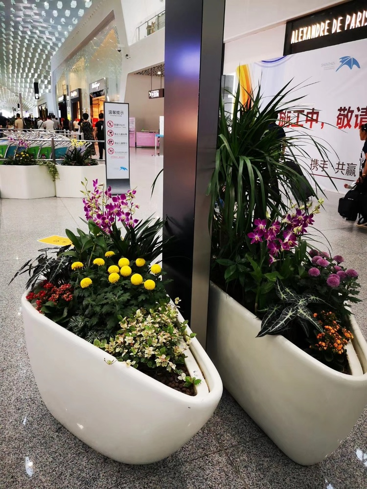 如何选择一家效劳好的办公室花卉租摆公司